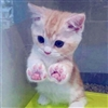 Cute paws Puzzle