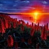 Red Sun Rising Puzzle