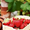 Luscious Strawberries Puzzle