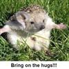 Hugs Puzzle