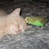 Cat Bird Puzzle
