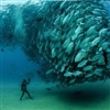 Ocean Wonders Puzzle