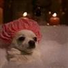 Puppy Bath Puzzle