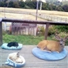 Deer Cat Dog Puzzle