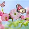 Butterfly on a pink flower Puzzle