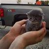 Kitty !!