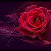 Valentine Rose Puzzle