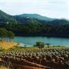 Lavenders farm Puzzle