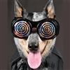 Hypno Dog Puzzle