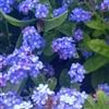 flowering Puzzle
