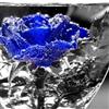 A blue rose Puzzle