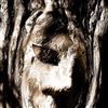 Face in Tree