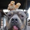 Dog Chicks Puzzle