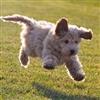 Puppy !!