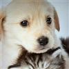 Puppy Kitten Puzzle