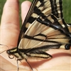 A visiting butterfly that was not camera shy