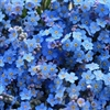 Forget me not Puzzle