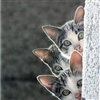 Kittens Puzzle