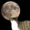 Cat Moon Puzzle