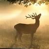 Deer Puzzle