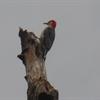 Mr Woodpecker Puzzle