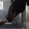Budweiser Horse and Puppy