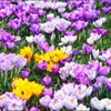 Spring Flowers Puzzle