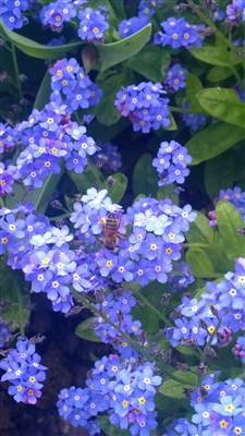flowering