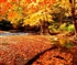 Autumn Puzzle