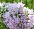 Peek A Boo Flower Puzzle