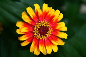 WHAT IS THE MEANING OF A FLOWER?