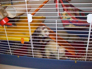 Ferrets always toilet in one corner of the cage, but so the urine doesn't make their fur smell and make conditions unpleasant for them what should they be given to toilet upon?