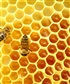 Bees are the most technical creatives among all other beings an ultimate creation
