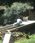 My son fixing our river bridge with the help of Madame Migs Goat in Charge