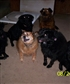 My dogs, around 7 yrs old here, a year before brown in middle past away.
