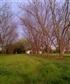 November in the pecan grove