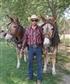 mule mares