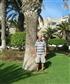 Palm trees and sunshine. Ahhh.