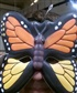 "Mariposa Man, and ""Yes""I like butterflies! :)"