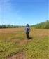 Blueberry Field Prince Edward Island
