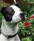 My dog Axel