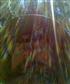 in Flagstaffs aspen woods