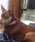 My dog - Jess