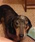 Samantha, rescued the night hurricane Ike hit.
