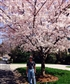 Jeff and the cherry blossoms