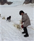 Husky ride Alaska