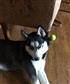 she loves her tennis ball