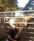 At the bull ride