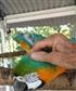 Hansie my parrot
