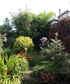 my garden in the middle of Dublin